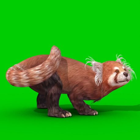 Red Panda Green Screen 3D Animation PixelBoom