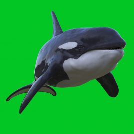 Green Screen Orca Killer Whale 3D Animation PixelBoom
