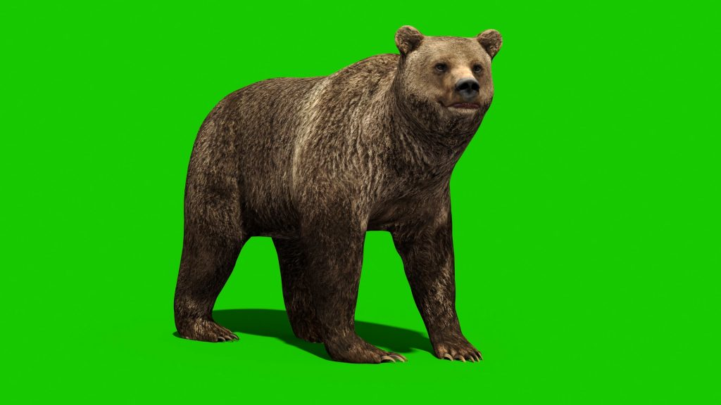 Green Screen Bear Animals 3D Animation PixelBoom