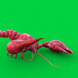 Green Screen Crayfish 3D Animation PixelBoom