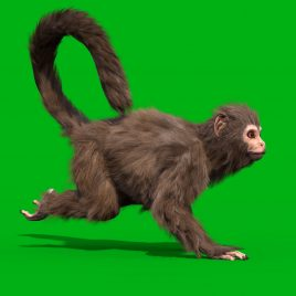 Green Screen Monkey Real Fur 3D Animation PixelBoom
