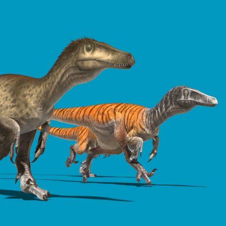 Austroraptor Blue Screen Dinosaurs 3D Animation PixelBoom