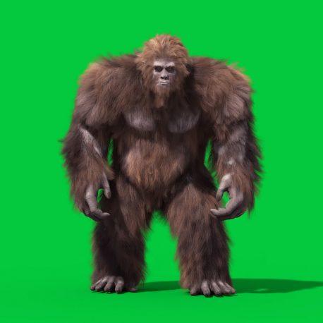 Green Screen Bigfoot Yeti Real Fur 3D Animation PixelBoom