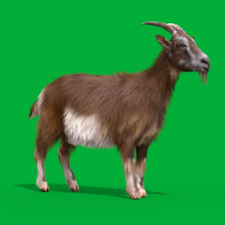 Green Screen Goat Real Fur 3D Animation Animals PixelBoom