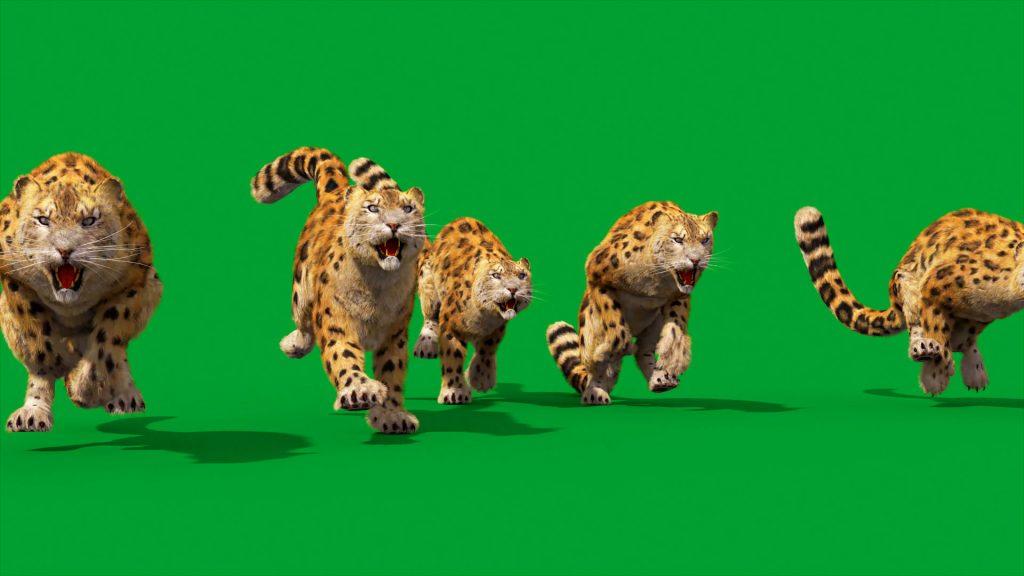Green Screen Leopard Real Fur 3D Animation PixelBoom 4K