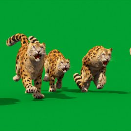 Green Screen Leopard Real Fur 3D Animation PixelBoom 4K