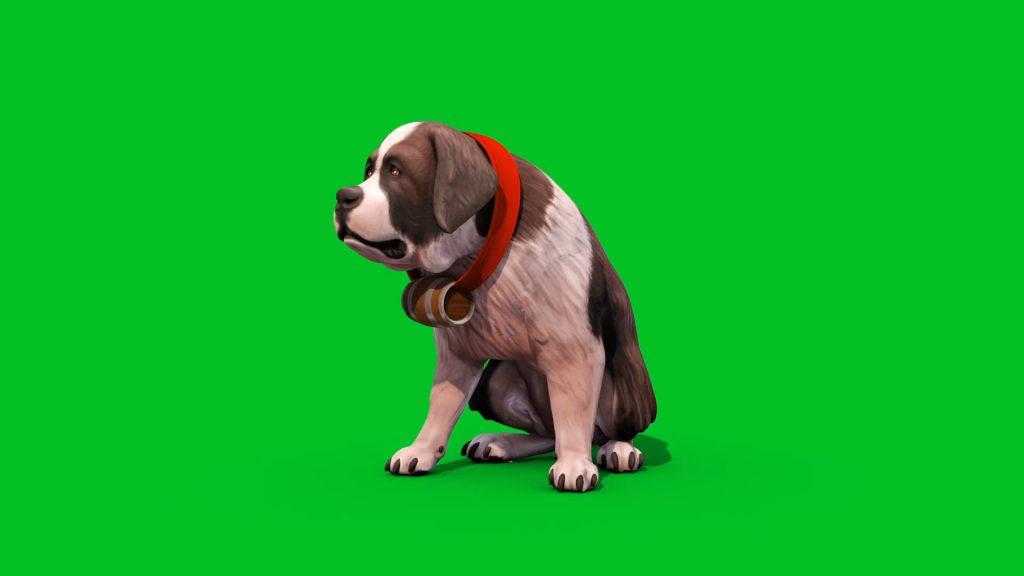 Green Screen Saint Bernard Dog 3D Animation PixelBoom