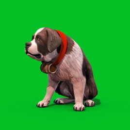 Green Screen Saint Bernard Dog 3D Animation PixelBoom