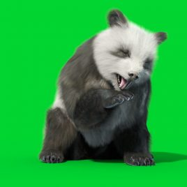 Green Screen Panda Real Fur 3D Animation PixelBoom